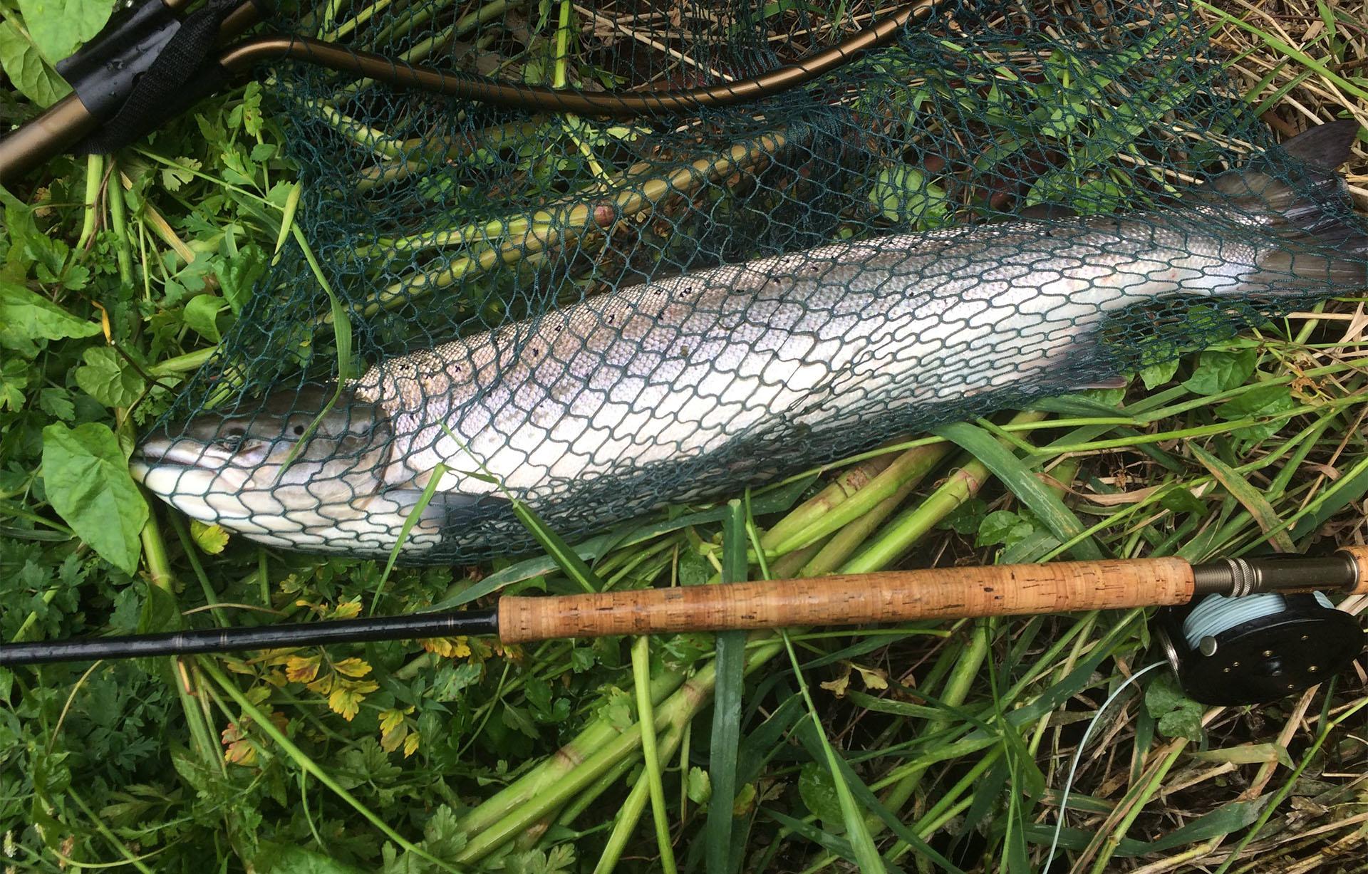 4th_fish.jpg
