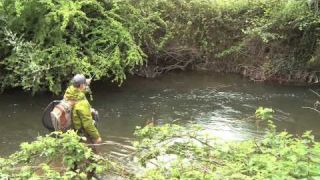 Fly Fishing Small UK Rivers for Big Trout - The River Tone, Somerset